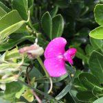 ORIGINAL PINK FLOWER
